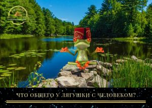 гипноз лягушка данилевский россия